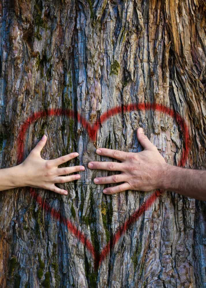 Hands of couple in love hugging a tree with painted red heart. Marriage, relationship, love concept.